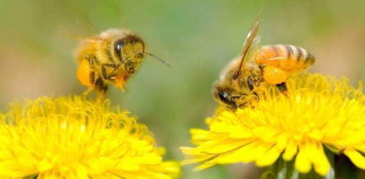What Do You Know About Pollination Process? Trivia Quiz