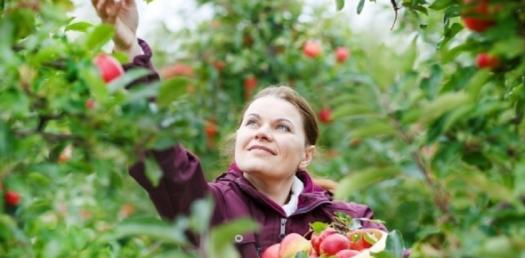 Horticulture: What Do You Know About Pomology? Trivia Quiz