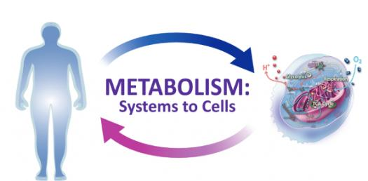 What Do You Know About Metabolism? Trivia Questions Quiz