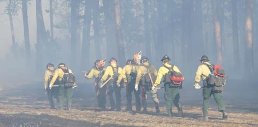 What Do You Know About Smokejumpers? Trivia Facts Quiz