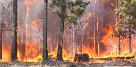 Test On Debbie And Forest Fire Essay! Trivia Questions Quiz