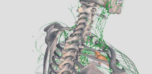 How Much Do You Know About Lymphatic System? Trivia Questions Quiz