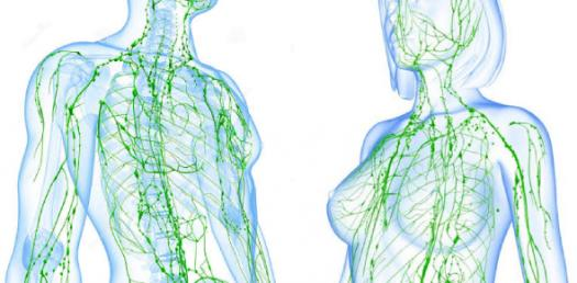What Do You Know About Lymphatic System? Trivia Questions Quiz