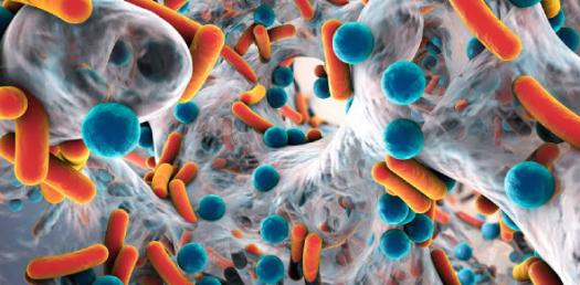 Microbiology Chapter 5 Medical Bacteriology Part 3