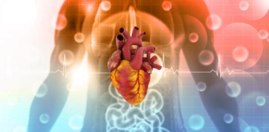 Quiz: Circulatory System Path Of Blood