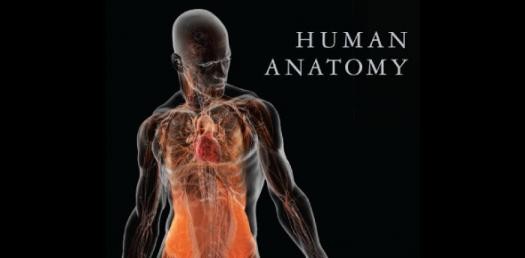 Human Anatomy Amazing Trivia Facts Quiz!