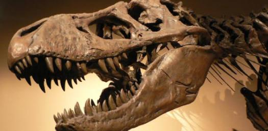 How Much Do You Actually Know About Fossils? Trivia Quiz