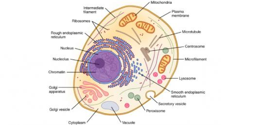 Test Your Knowledge About Cellular Organelles And Cell Transport! Trivia Quiz