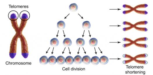Cell Division: What Do You Know About Meiosis? Trivia Quiz