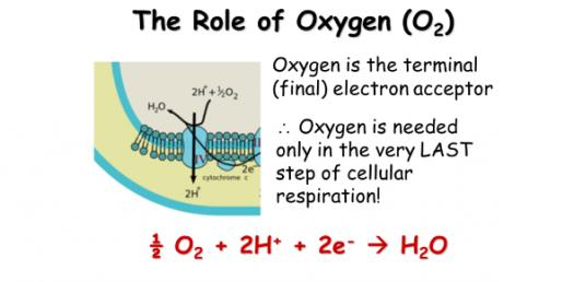 Role Of Oxygen In Respiration! Trivia Facts Quiz