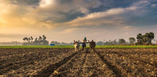 Geography Quiz: Agriculture In India! Trivia Questions