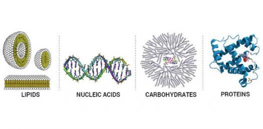 Chemistry: Biomolecule Trivia Quiz Questions!