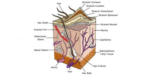 Quiz: NCLEX Practice Test For Skin And Integumentary Disease