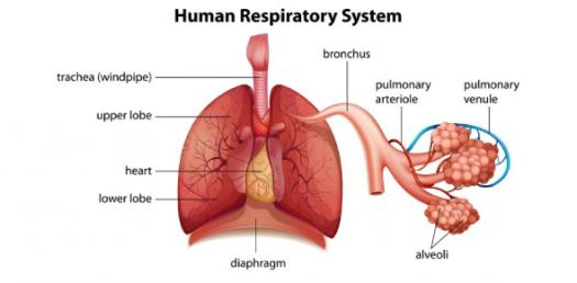 Quiz: NCLEX Practice Test For Respiratory System