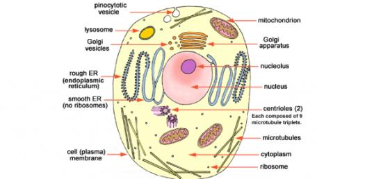 Biology: Trivia Questions On The Structure Of The Cell