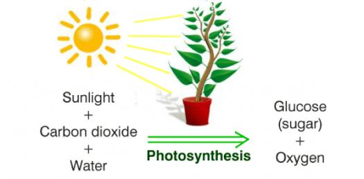 Biology: Trivia Questions On Photosynthesis!