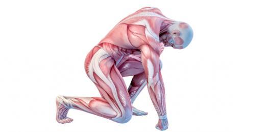 Human Body Quiz: Anatomy And Physiology