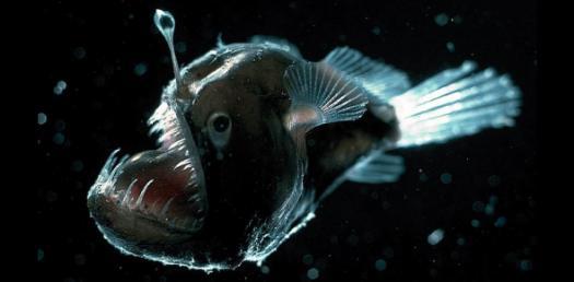 Trivia Facts About Deep Sea Creatures! Quiz