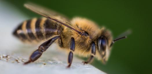 Basic Questions On Bees! Trivia Quiz
