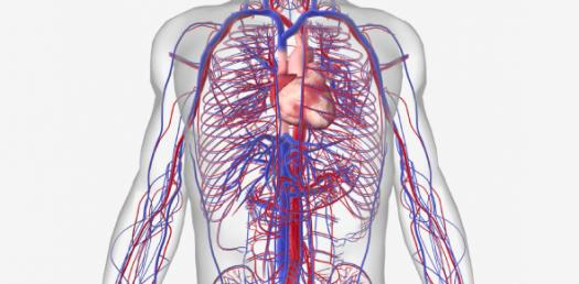Cardiovascular System: NCLEX Questions On Hematologic Disorders