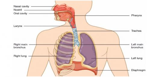 Nursing Quiz: NCLEX Questions On Respiratory System Disorder