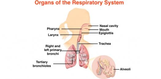 Quiz: Can You Pass The NCLEX Nursing Questions On Respiratory System?
