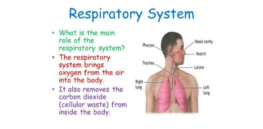 Quiz: NCLEX Nursing Practice Questions On Respiratory System Disorders