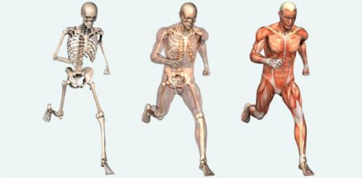 Human Body Systems Test Quiz!