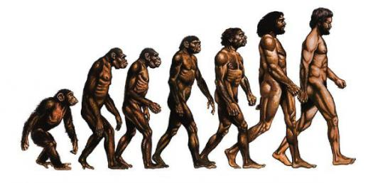 History Test Of Evolution Of Man(Early Hominids)