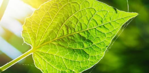 Biology Quiz: Important Questions On Photosynthesis