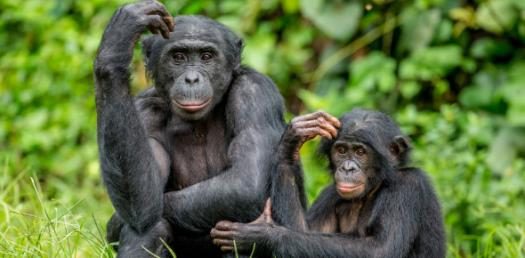Interesting Trivia Facts About Apes! Quiz