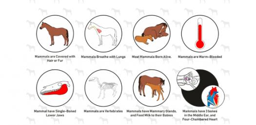 Different Types Of Animal Groups Animal Characteristics
