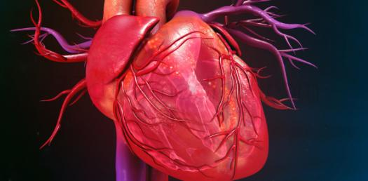 A Practice Test On Cardiology! Trivia Quiz
