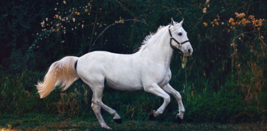 Amazing Trivia Facts About Horses! Quiz