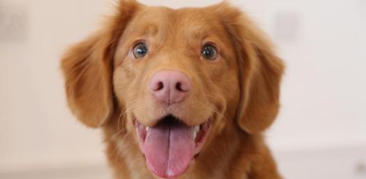 Trivia Facts And Questions On Dogs! Quiz