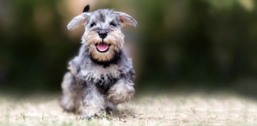 Dogs Facts! Trivia Knowledge Quiz