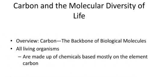Bsc1010c Chapter 4: Carbon And The Molecular Diversity Of Life Test!