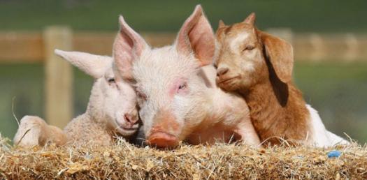 Animal Trivia Questions - 4