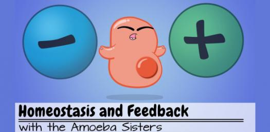 How Much You Know About Homeostasis? Trivia Quiz