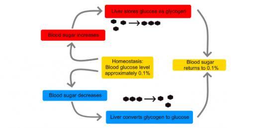 Control Systems And Homeostasis! Trivia Questions Quiz