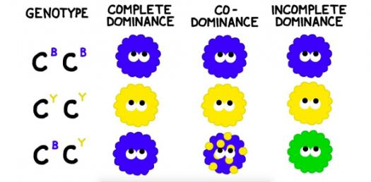 Trivia Quiz On Codominance And Incomplete Dominance!
