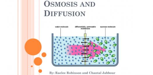 What Do You Know About Osmosis And Diffusion? Trivia Quiz