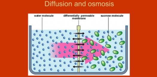 Osmosis And Diffusion Questions! Chemistry Trivia Quiz