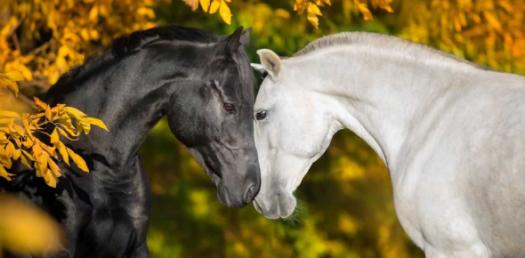 Trivia Knowledge Quiz For Horse Lovers!