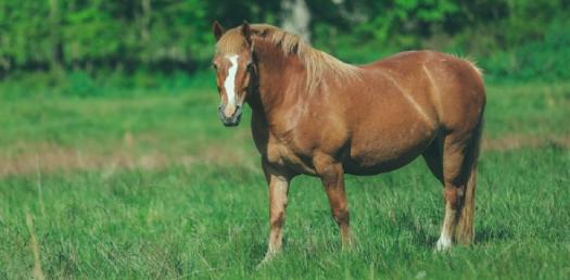 Quiz: Amazing And Bizarre Facts About Horses!