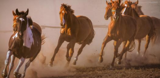 Horse Trivia: Can You Identify These Pictures? Quiz