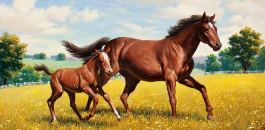 Quiz: Horse And Pony Breeds Facts! Trivia