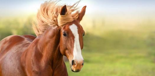 Horse Facts Trivia: How Well Do You Know? Quiz
