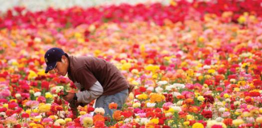 What Do You Know About Floriculture? Trivia Quiz