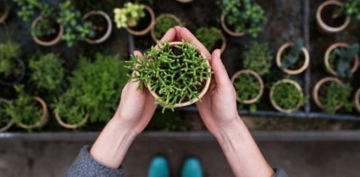 Horticulture Basic Trivia Questions! Quiz